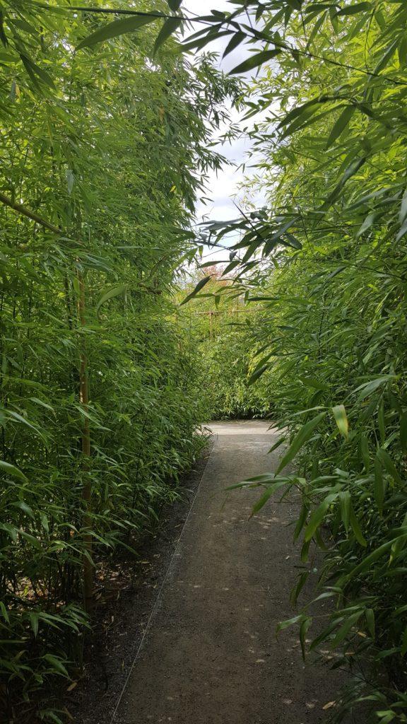 Ein schmaler Weg inmitten von meterhohen Bambus.