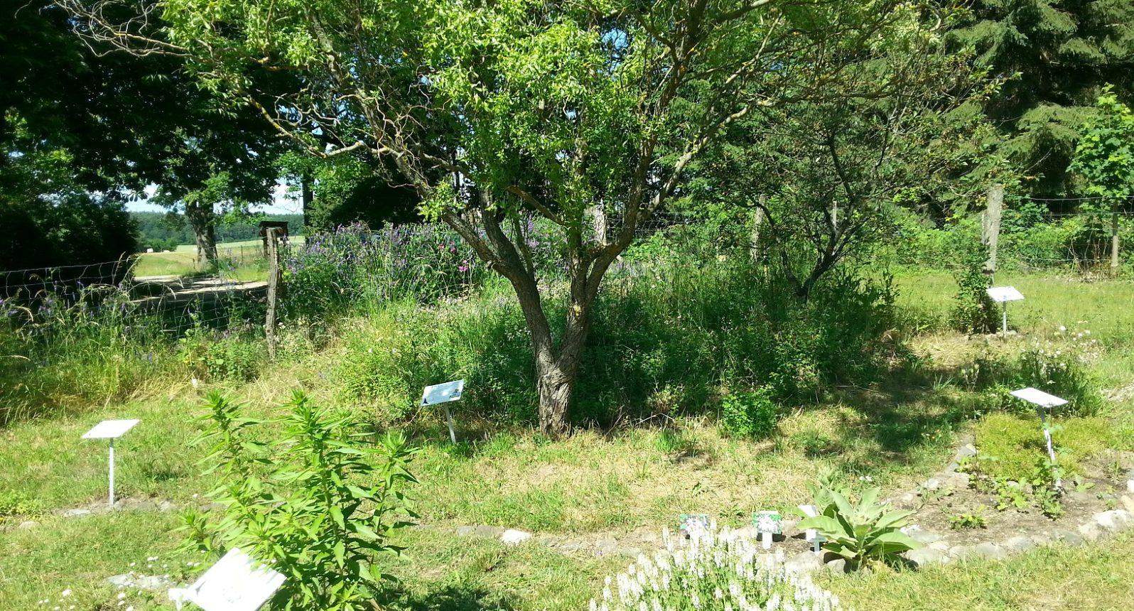 Blick in einen Schaugarten mit Pflanzen und Beschilderung