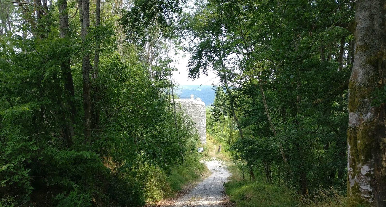 Wanderweg im Wald
