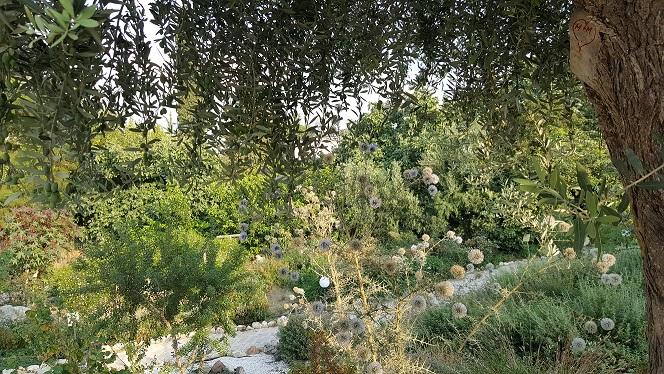 Der Kräutergarten im Restaurant Herbs Garden in Polis.