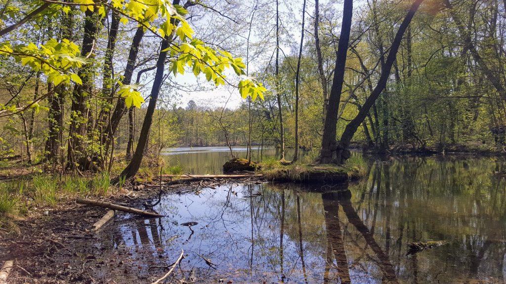 Der Mühlenteich am Schloss Dammsmühle mit kleinen Inseln und  sich frei entfaltendem Wald.