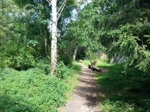 Von Pflanzen überwucherter Pfad im Leisepark