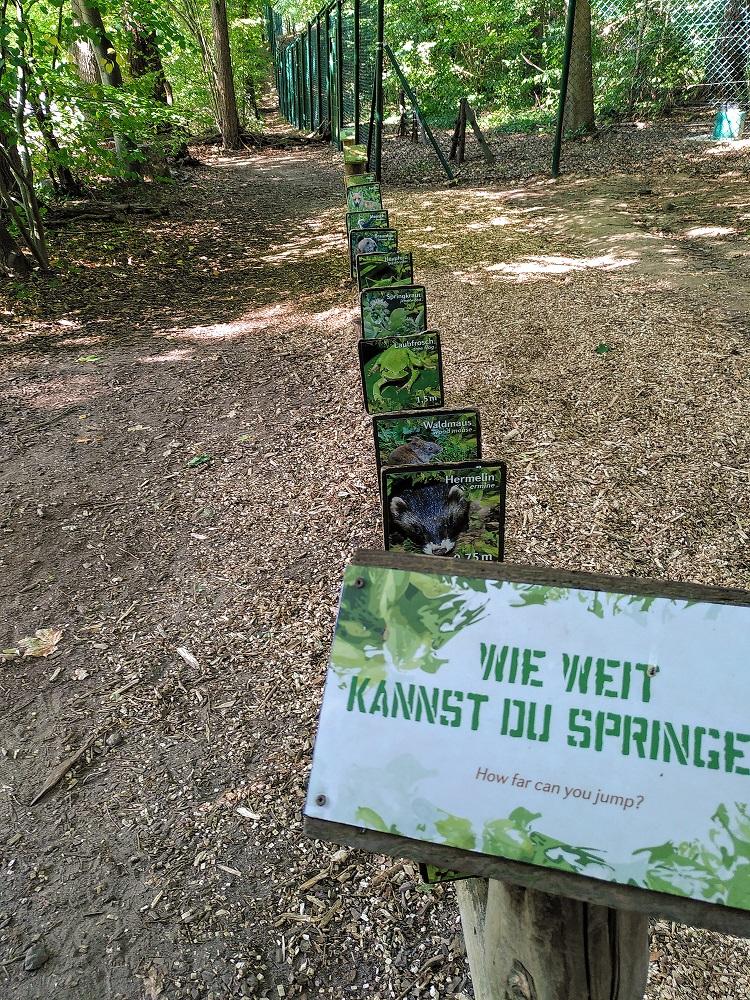 Weitsprungtest im Bärenwald Müritz.