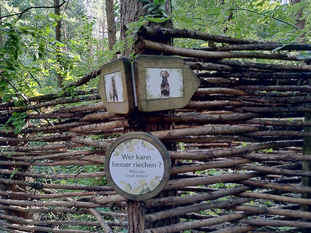 Ein sich gabelnder Weg im Labyrinth im Bärenwald Müritz.