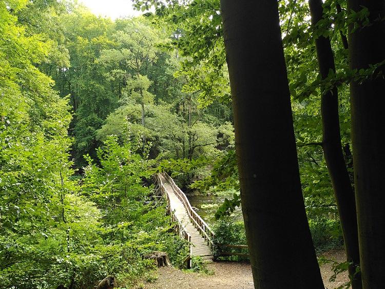 Blick auf eine Holzbrücke an der Warnow von oben.
