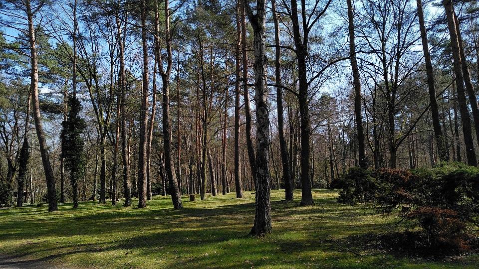 Blick auf einen ausgedünnten Waldbereich.