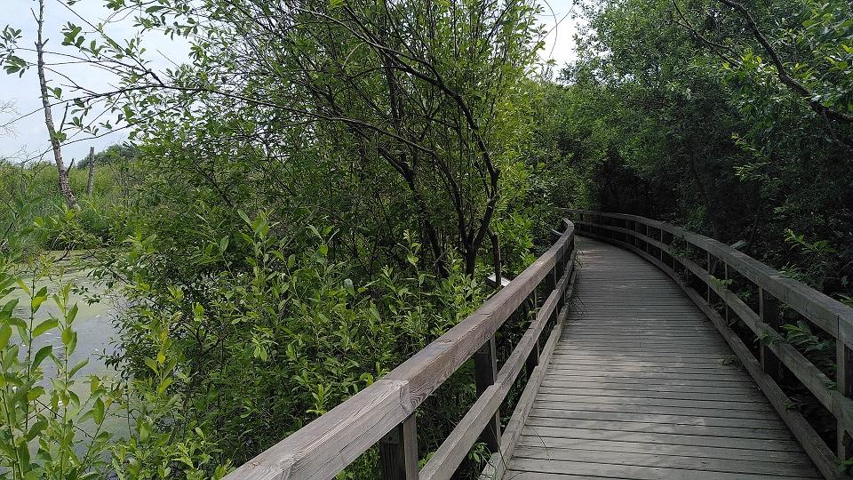 Bohlenweg mit Geländer eingerahmt von Bäumen und Büschen und auf der einen Seite ein bisschen Wasser.