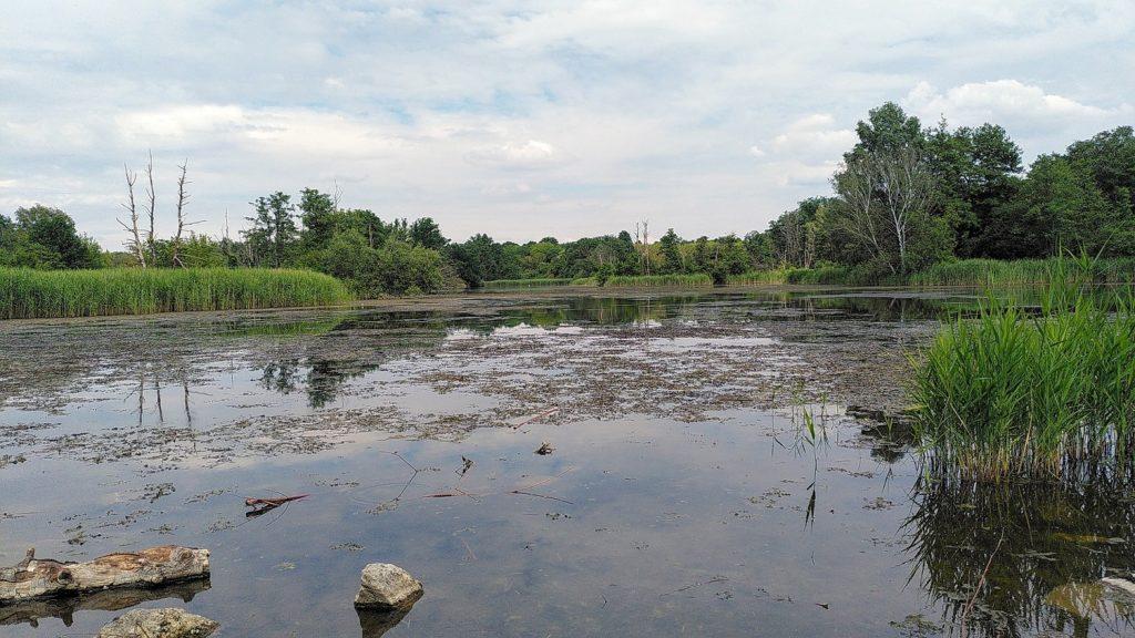 Blick auf den See mit grünem Schilf und flachem Ufer an den Steine und Äste liegen.