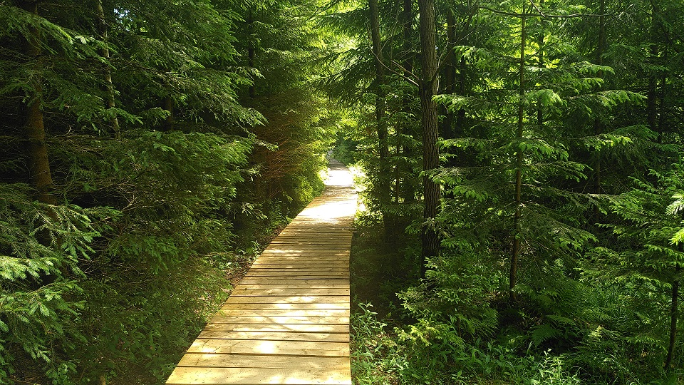 Heller Bohlenweg umgeben von Nadelbäumen und Halbsträuchern.