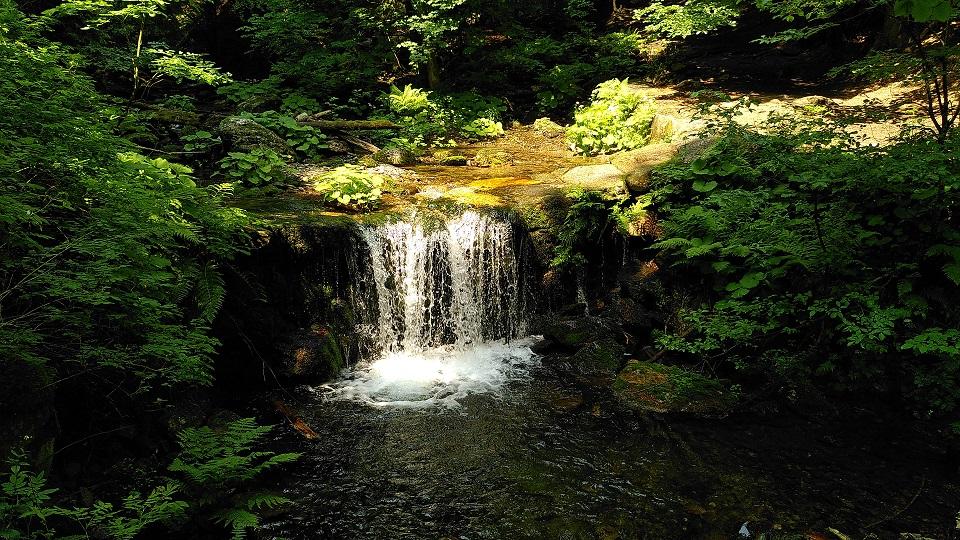 Kleiner Wasserfall umgeben von Bäumen und Büschen.